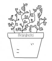 Brandnetel